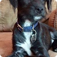 Adopt A Pet :: Hughey - Davie, FL