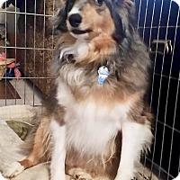 Adopt A Pet :: Max - Adoption Pending - Northeast, OH