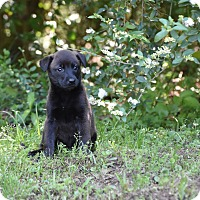 Adopt A Pet :: Baby - Groton, MA