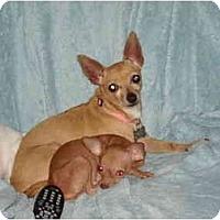 Adopt A Pet :: Marley - Houston, TX