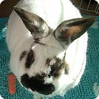 Adopt A Pet :: Ozzie - Williston, FL
