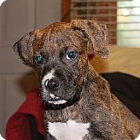 Adopt A Pet :: Wink - ARDEN, NC