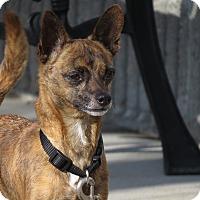 Adopt A Pet :: Ciro - Meridian, ID