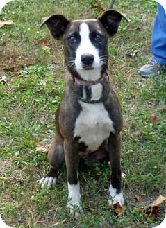 Terrier (Unknown Type, Medium) Mix Dog for adoption in Livingston, Texas - Wags
