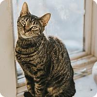 Adopt A Pet :: Terri - Indianapolis, IN