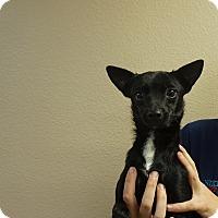 Adopt A Pet :: T.J - Oviedo, FL