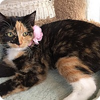 Adopt A Pet :: Jazzy - Metairie, LA
