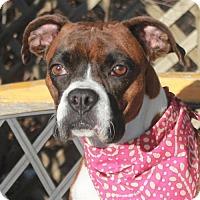 Adopt A Pet :: Leigh - Garfield Heights, OH