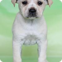 Adopt A Pet :: Florence - Waldorf, MD