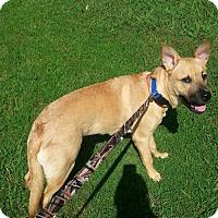 Adopt A Pet :: Yoda(CL) - Greensboro, NC