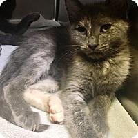 Adopt A Pet :: Swan - Americus, GA