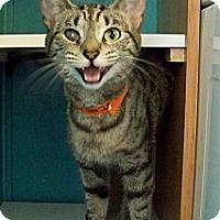 Adopt A Pet :: Cleopatra - Dover, OH