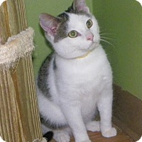 Adopt A Pet :: Jack - Dover, OH