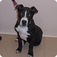 Adopt A Pet :: Foster - Gary, IN