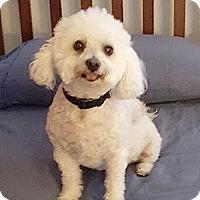 Adopt A Pet :: Maxine & Fessy - East Hanover, NJ