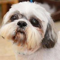 Adopt A Pet :: Keifer Harris - Houston, TX