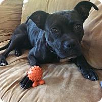 Adopt A Pet :: Raine - Muskegon, MI