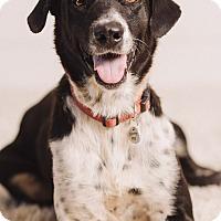 Adopt A Pet :: Maxine - Portland, OR