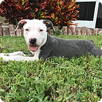 Adopt A Pet :: Kakuna - Ft. Myers, FL