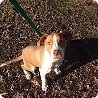 Adopt A Pet :: HENRY - Sterling, MA