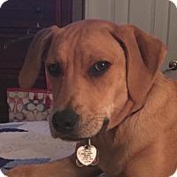 Adopt A Pet :: Lyric - Smithfield, NC