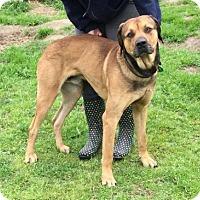 Adopt A Pet :: Anias - Quinlan, TX
