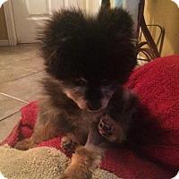 Adopt A Pet :: Felix 3254 - Toronto, ON