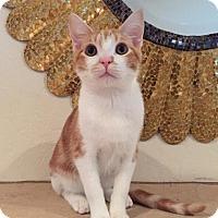 Adopt A Pet :: Jackson - Parlier, CA