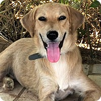 Adopt A Pet :: Cassie - Sunnyvale, CA