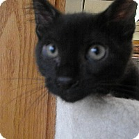 Adopt A Pet :: Amora - Milwaukee, WI