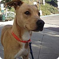 Adopt A Pet :: Mia - Mission Viejo, CA