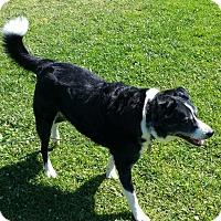 Adopt A Pet :: Sadie - Monrovia, CA