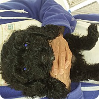 Adopt A Pet :: Jasper - Algonquin, IL