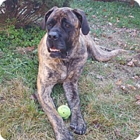 Adopt A Pet :: Tessa - Hazard, KY