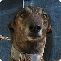 Adopt A Pet :: Judi - Oak Ridge, NC