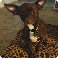 Adopt A Pet :: Hickory - Las Vegas, NV