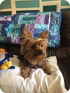 Adopt A Dog Brownsville Texas