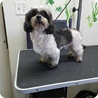 Adopt A Pet :: BUSCUIT - Gustine, CA
