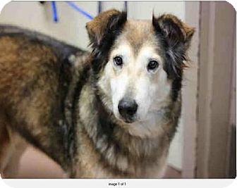 Collie Mix Dog for adoption in San Diego, California - Rita