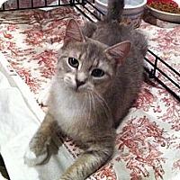Adopt A Pet :: Asia - Harriman, NY