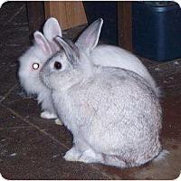 Adopt A Pet :: Bun & Bunny - Williston, FL