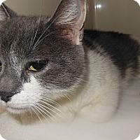 Adopt A Pet :: Missy - Sanford, ME