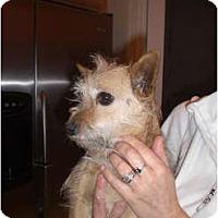 Adopt A Pet :: Zoey - Rescue, CA