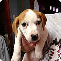 Adopt A Pet :: Winnie - Humboldt, TN