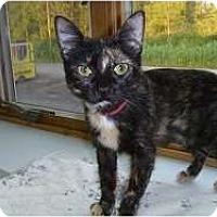 Adopt A Pet :: Glendora - Hamburg, NY