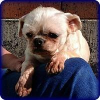 Adopt A Pet :: RYDER - ADOPTION PENDING - Seymour, MO