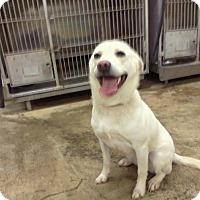 Adopt A Pet :: JODY - Upper Sandusky, OH