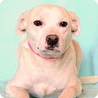 Adopt A Pet :: Harmony - Waldorf, MD