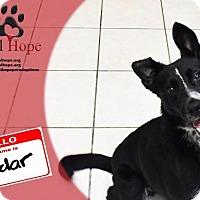 Adopt A Pet :: Radar - Fort Worth, TX