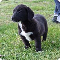 Adopt A Pet :: Juliet - Harmony, Glocester, RI